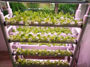 Specially Invented Hydroponic System
